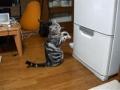 O voodoo do gato para abrir o frigorífico