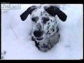 O mais divertido vídeo sobre um cão e a neve