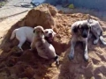 Brincadeiras na areia