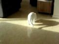 Gato brinca