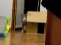 Gato surrateiro brinca com câmara