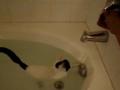 Gato que gosta do banho!?