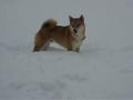 Quanta alegria traz a neve